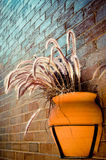 Blumentopffall auf der Backsteinmauer mit Feder Pennisetum Lizenzfreie Stockbilder