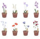 Blumentöpfe mit Blumen - Iris, hyacinthus, Glockenblume Stockfotografie