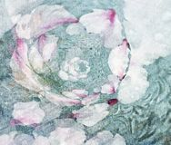 Blumentranszendenz lizenzfreie stockbilder