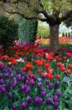 Blumentulpengarten, Tulpenfestival stockfotos