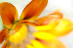 Blumenunschärfe Stockbild