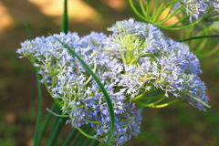 Blumenunschärfetapete Stockbild