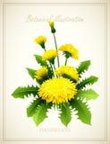 Blumenvektorillustration Stockfotos