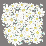 Blumenvektorillustration umfasst Kamille Stockbild