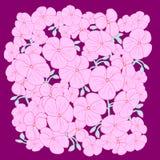 Blumenvektorillustration umfasst Pelargonie Stockbilder