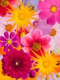 Blumenverzierung Lizenzfreies Stockfoto