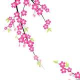 Blumenverzierung - Sakura Lizenzfreie Stockfotografie