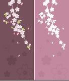 Blumenverzierung - Sakura Lizenzfreie Stockfotos