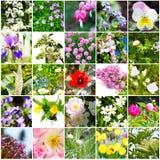 Blumenvielzahl, Blumenmosaik stockbild