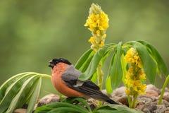 Blumenvogel Lizenzfreie Stockbilder