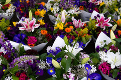 Blumenvorbereitungen Lizenzfreie Stockbilder