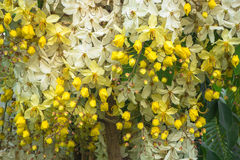 Blumenvorhang Stockbilder
