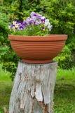 Blumenwachsen auf dem Stumpf Lizenzfreies Stockbild