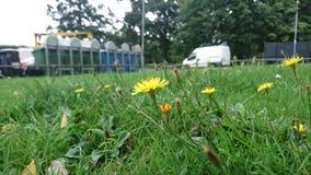 Blumenwachsen auf einer Wohnsiedlung Lizenzfreies Stockfoto