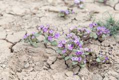 Blumenwachsen aus Sprüngen in der Erde heraus lizenzfreie stockbilder