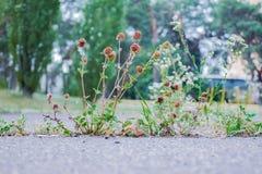 Blumenwachsen vom Beton Stockfoto