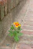 Blumenwachsendes zwischen Ziegelsteinen Lizenzfreie Stockfotos