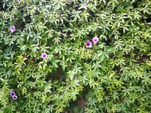 Blumenwand Lizenzfreie Stockfotos