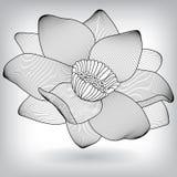 Blumenwasser Lily Lotus Elements für Design Lizenzfreies Stockbild