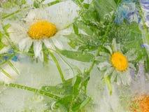 Blumenwasserabstraktion Stockbild