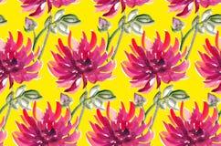 Blumenwatercolourdahlie Aster, Chrysantheme Lizenzfreie Stockbilder