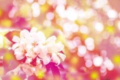 Blumenweinlese-Tonhintergrund Lizenzfreies Stockfoto