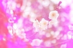 Blumenweinlese-Tonhintergrund Stockbilder
