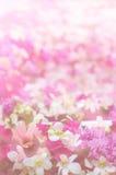 Blumenweinlese-Tonhintergrund Lizenzfreie Stockbilder