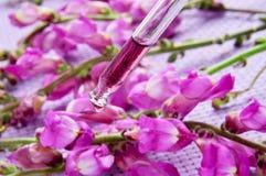 Blumenwesentliches Stockfoto