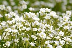 Blumenwiese Lizenzfreies Stockbild