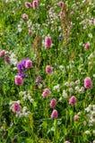 Blumenwiese Stockfotografie