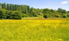 Blumenwiese Stockbild