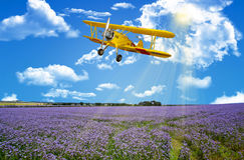 Blumenwiese des blauen Himmels stockfoto