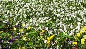 Blumenwiese Hintergrund, Natur Stockbild