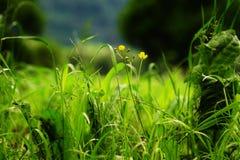 Blumenwiese im Holz Lizenzfreies Stockbild