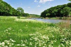 Blumenwiese im Vordergrund Lizenzfreie Stockfotografie