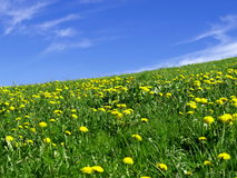 Blumenwiese mit blauem Himmel Lizenzfreie Stockbilder