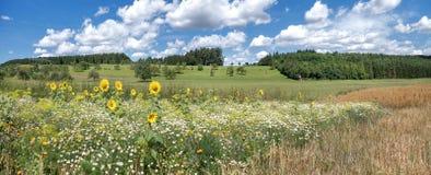 Blumenwiese mit Sonnenblumen Lizenzfreie Stockfotografie