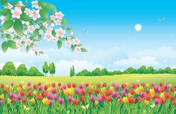 Blumenwiese. Tulpen Stockfoto