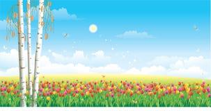 Blumenwiese. Tulpen stock abbildung