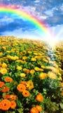 Blumenwiese und -regenbogen Lizenzfreie Stockbilder