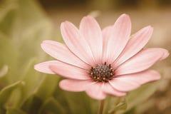 Blumenwiesenweinlese Retro- Stockbild