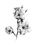 Blumenzeichnungs-Skizzenkunst handgemacht Lizenzfreies Stockbild
