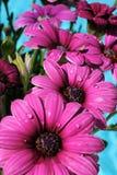 Blumenzeile mit Tröpfchen. Lizenzfreie Stockbilder