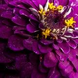Blumenzusammenfassung lizenzfreies stockbild