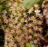 Blumenzusammenfassung Stockbild