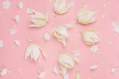 Blumenzusammensetzung auf rosa Hintergrund, Pastellton Draufsicht, flache Lage Stockbilder