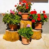 Blumenzusammensetzung der Pelargonie über hölzernen Klotz Lizenzfreie Stockfotos