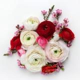 Blumenzusammensetzung mit einem Rosa Ranunculus blüht auf weißem Hintergrund Flache Lage Lizenzfreies Stockbild