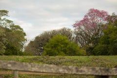 Blumiger Baum mit bunten Blumen Stockbilder